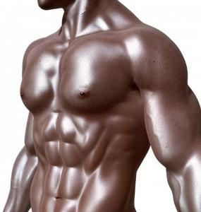 อวัยวะต่างๆในร่างกาย